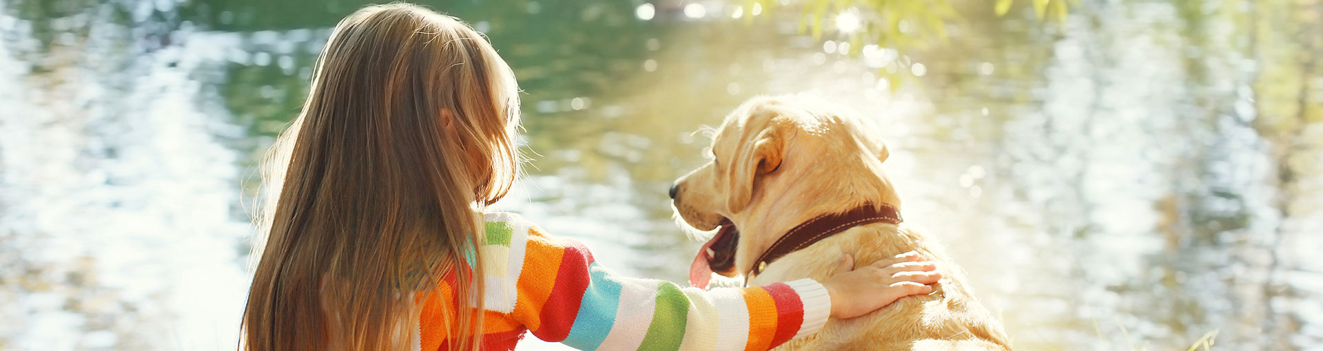 Quality Inn's offering pet friendly hotel accommodations with families with dogs